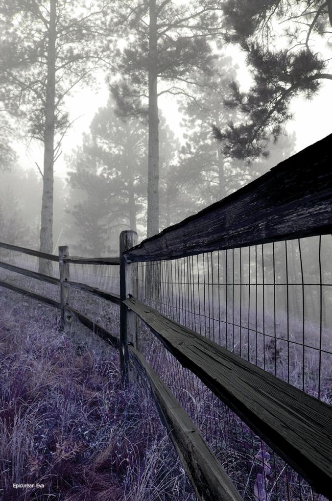 Back-fenceweb