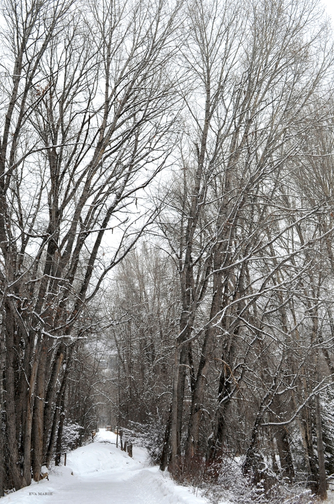 winter-path-web